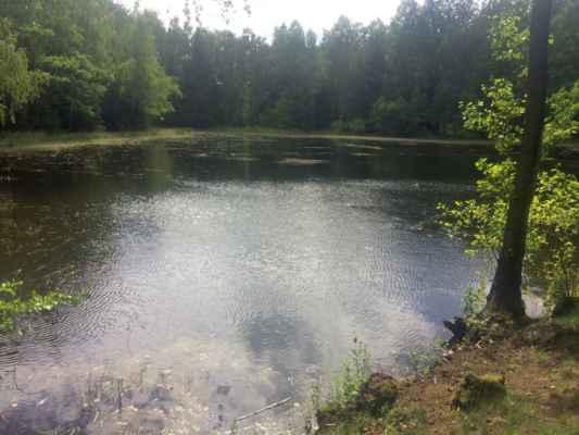 Rybník u tábora XI