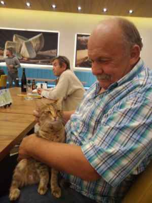 Kočka v restauraci.