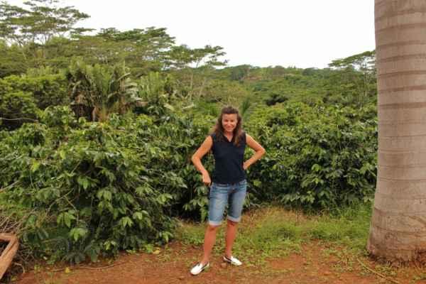 kávové plantáže