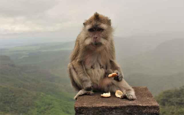 opičák stráží vyhlídky