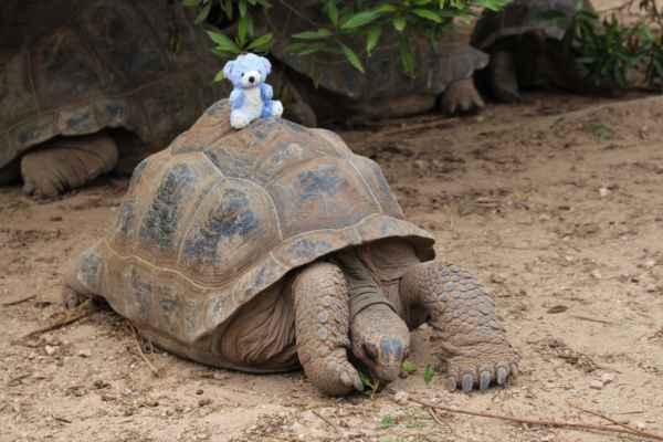 70 letá želva z ostrova Aldabra