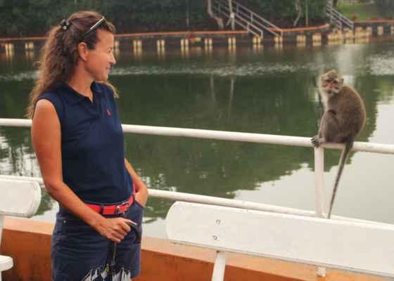 jen opičáci a my