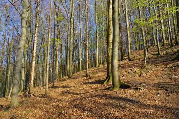 národní přírodní rezervace zahrnuje prakticky celou horu. hlavně díky ní se podařilo zachovat původní smíšené lesy...