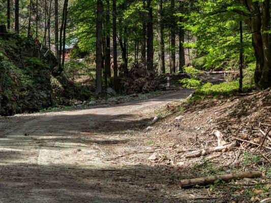 V tejto časti opúšťame lesnú cestu a asi 350 m dlhý úsek vedie pozdĺž potoka.