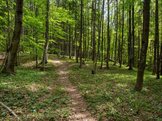 Za potokom už vchádzame do bukového lesa a začína stúpanie