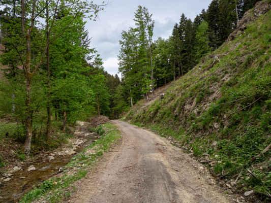 Na lesnej ceste na nás už sem tam padajú prvé kvapky, pravdepodobne len doviate silným vetrom z hrebeňa