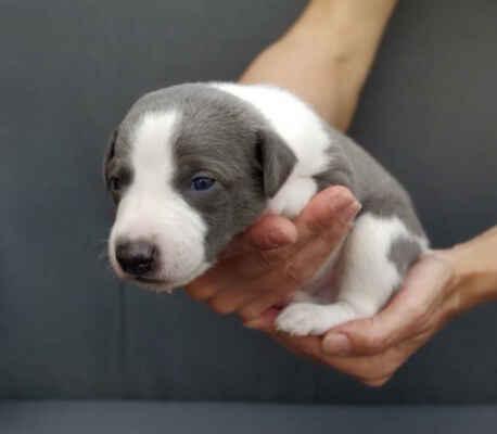 Nawaro Blue - Stáří 16 dní, máme krátce otevřené oči a jsme poprvé venku...