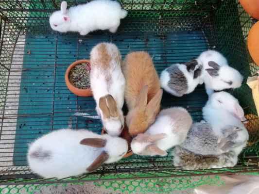 Malí králíčci.