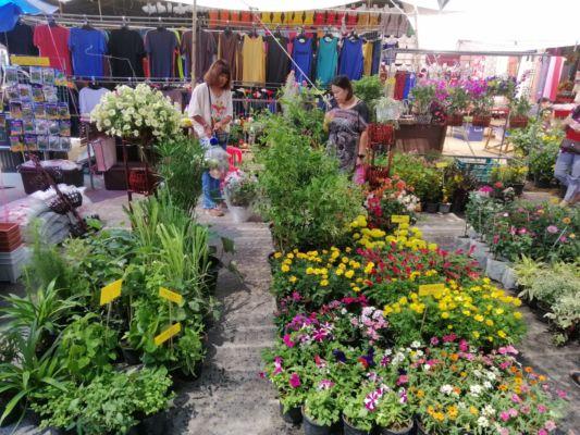 Na trhu se dají koupit různé květiny.