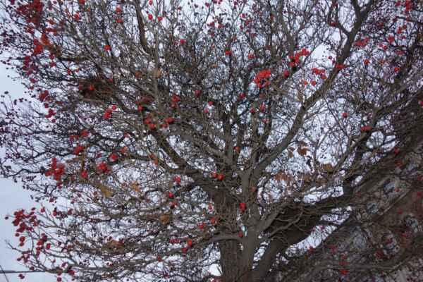 A to bylo z návštěvy Jindřišské věže vše. HMS potkala známé, a tak šla ještě prozkoumat kavárnu. No a my se vydaly ještě na Staromák podívat se na vánoční strom.