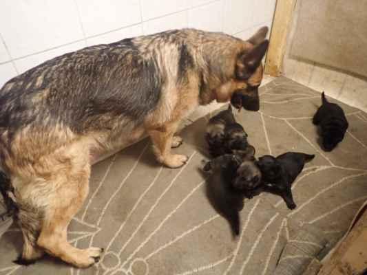 Rodinka pod dozorem.