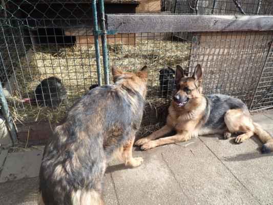 Janča a Lada je pilně dozorují.