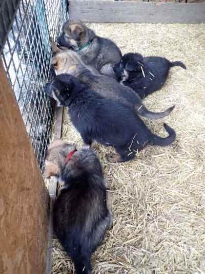 A zkouknout co dělají máma s tetama za plotem.